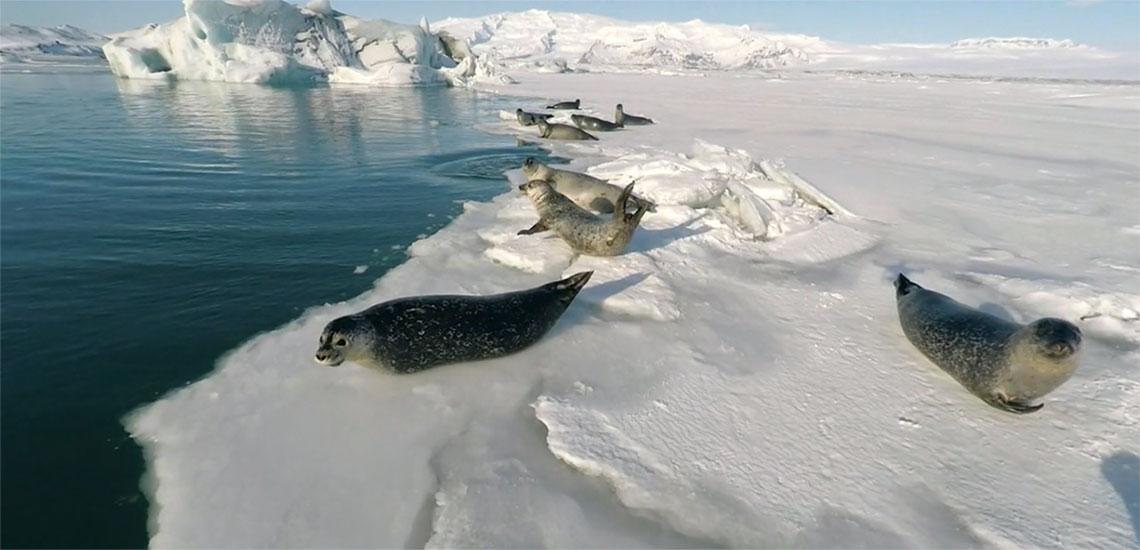 Арктическая красота