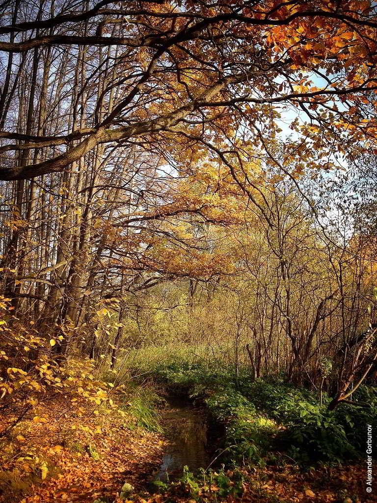 Осень Дуб