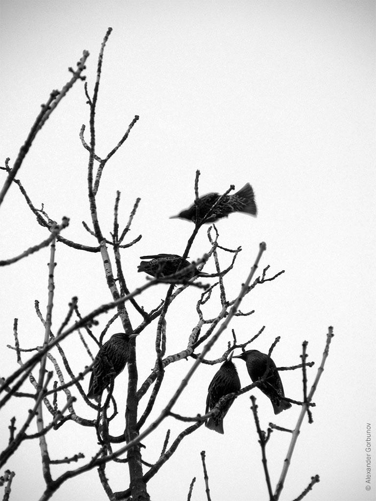 Весна Скворцы прилетели