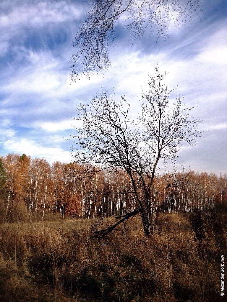 Осень жизни
