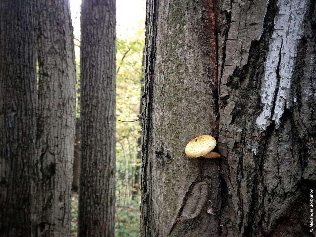 Осенняя жизнь