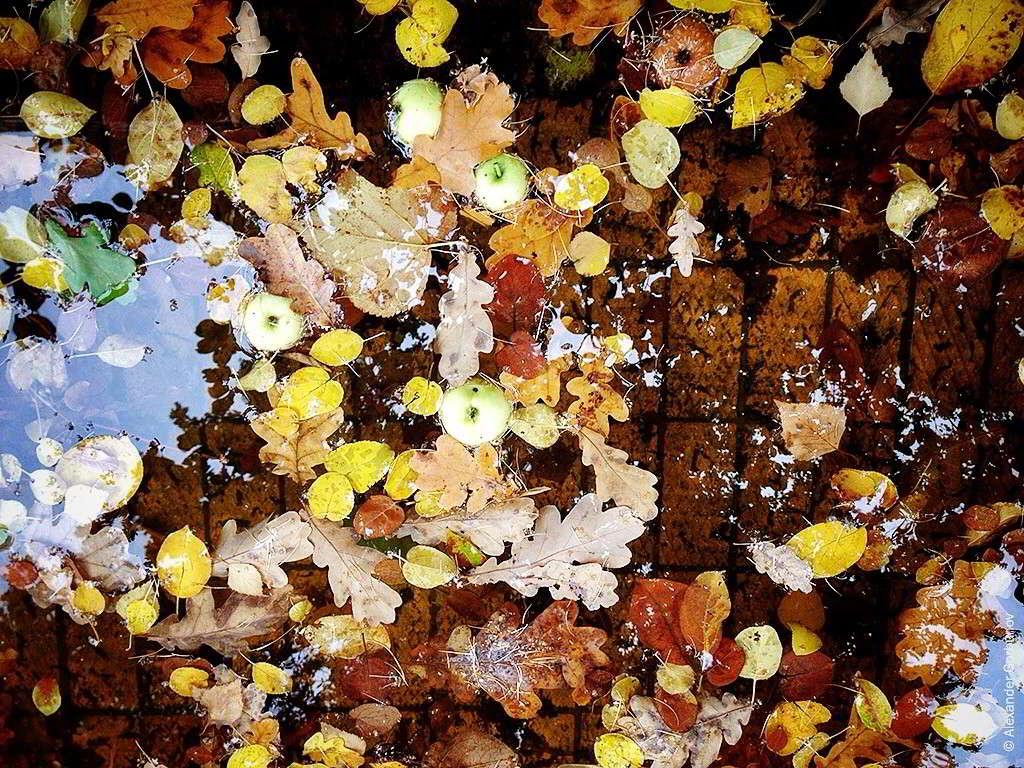 Листья в яблоках